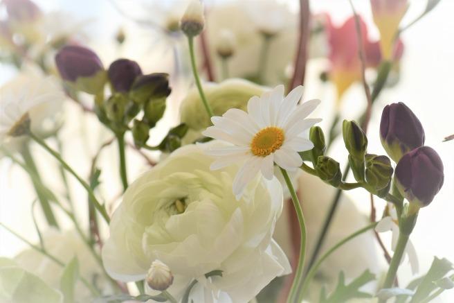 flower-blossom-2117952_1920.jpg